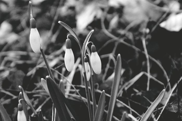 EyeEm Best Shots - Black + White Blackandwhite Blackandwhite Photography Black & White B_w Collection Schwarzweiß Moment Of Silence Moments Melancholy Sony EyeEm Best Shots EyeEmNewHere EyeEm Nature Lover EyeEm Gallery Nature No People Focus On Foreground Outdoors Flower