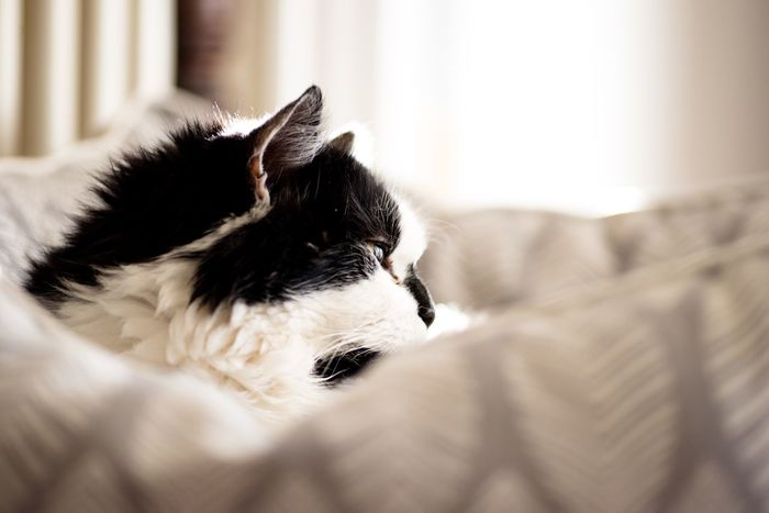 Daylight Bokeh Cat Cats EyeEm Selects One Animal Animal Themes Pets Domestic Animals Indoors  Mammal Close-up Focus On Foreground No People Home Interior Day