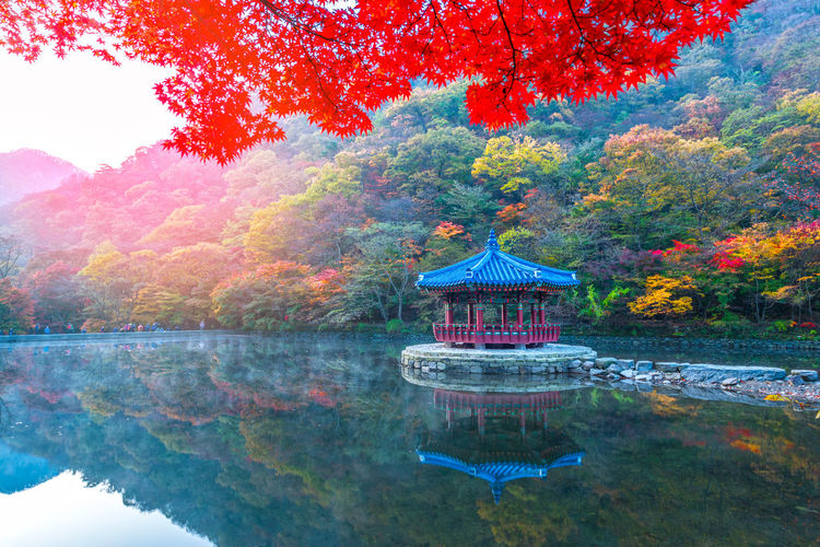 Autumn in Naejangsan National park, South Korea. Water Tree Reflection Plant Autumn Built Structure Architecture Lake Change Nature Waterfront Beauty In Nature No People Day Building Exterior Tranquil Scene Tranquility Scenics - Nature Building Outdoors