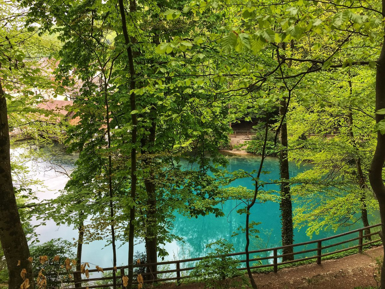 tree, plant, growth, beauty in nature, lake, water, tranquility, green color, nature, reflection, tranquil scene, forest, day, land, no people, branch, scenics - nature, outdoors, idyllic