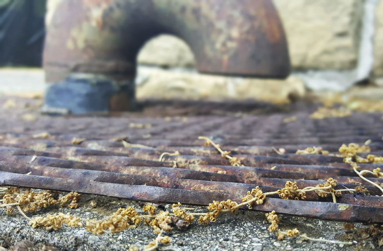 Deterioration Focus On Foreground Metal Grate No People Outdoors Plant Material Rust Steel Steel Pipe