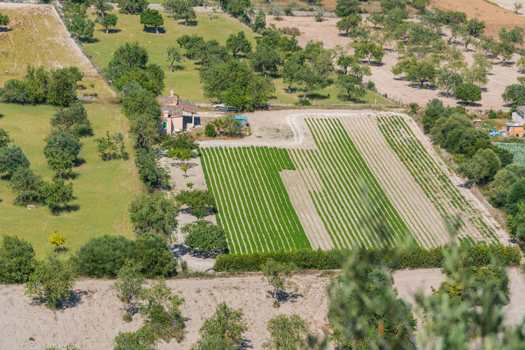 Panoramic view of different fields, Mallorca, Spain Majorca Olive Trees Agriculture Backgrounds Beauty In Nature Day Farm Field Field; Fields Green Color Growth High Angle View Landscape Nature No People Outdoors Patchwork Landscape Plant Plantation Rural Scene Scenics Social Issues Stone Wall