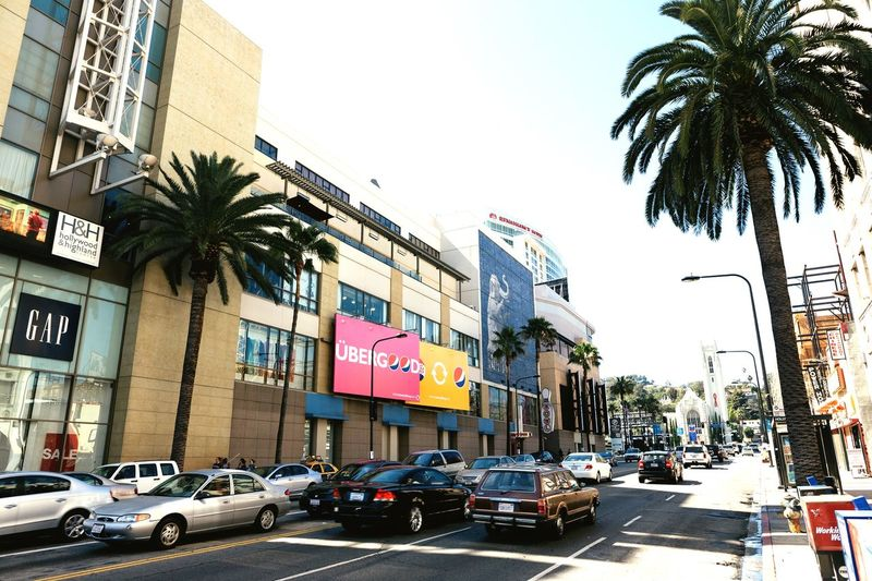 Hollywood blvd in July Steeet Photography Street Life Hollywood Blvd Mode Of Transportation Transportation Building Exterior Car Motor Vehicle Architecture City Built Structure Tree Land Vehicle Street Palm Tree Tropical Climate Sky Plant Road Clear Sky Building Day