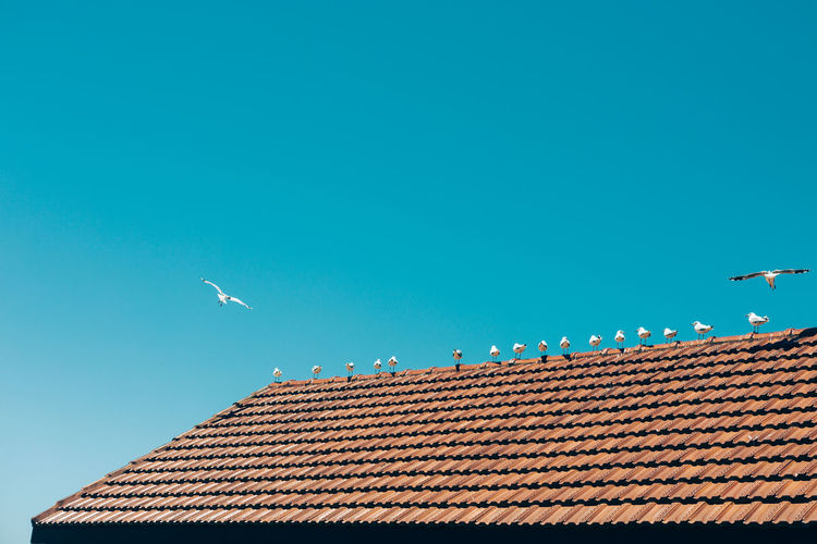 Sky Low Angle View Roof Bird Clear Sky Animal Themes Animal Copy Space Vertebrate Architecture Building Exterior Blue Animal Wildlife Nature Flying Animals In The Wild Built Structure No People Roof Tile Day Outdoors Seagull Outdoor