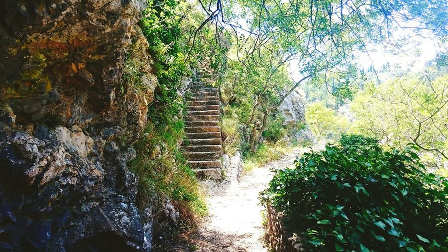 Stairs In Nature Nature Old Rock Stairs Sun And Trees EyeEm Nature Lover Eyemcollections The Great Outdoors - 2017 EyeEm Awards