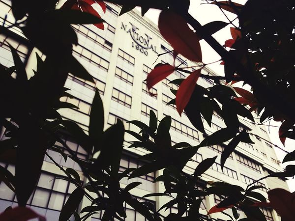 National University No People City Outdoors Building Exterior Architecture Low Angle View Leaf