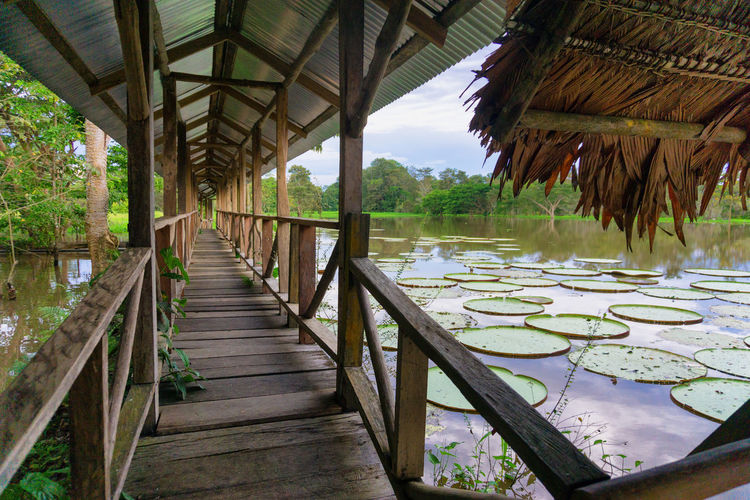 Covered wooden walkway and giant lily pads in the Amazon near Leticia, Colombia Amazon Amazonas Amazonia America Colombia Conservation Forest Jungle Landscape Leticia Nature Plant Rain Rainforest Reflection River South Tourism Travel Tree Tropical Vegetation View Water Wildlife