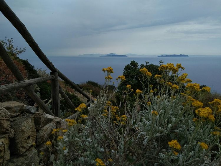 Marettimo island, Sicily Landscape Plant Nature Tree Sea Growth Scenics Uncultivated Cloud - Sky Tranquility Beauty In Nature No People Outdoors Travel Destinations Blue Sky Sunset Flower Water Day Sea Horizon Over Water Marettimo Favignana in Sicily