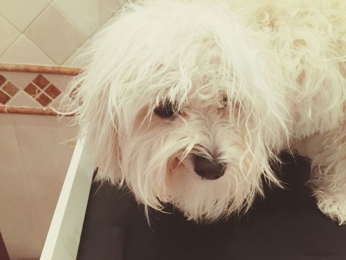 Time To Wake Up Isis😍 Ilovemydog Myprincess🐶🐶