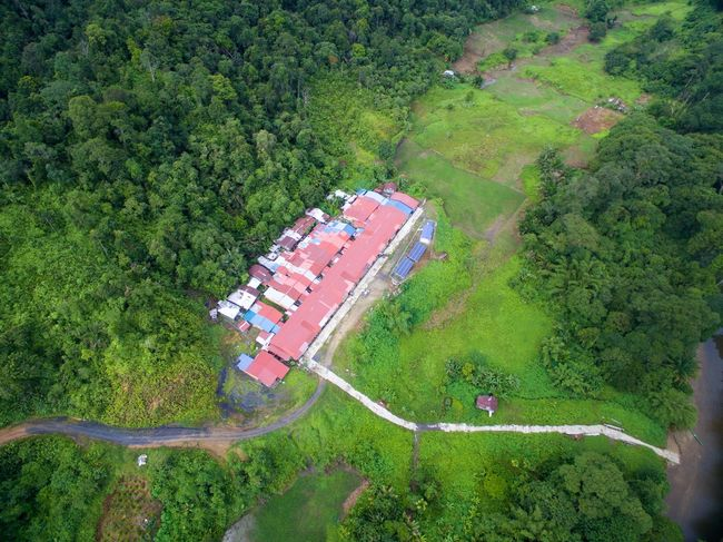 Aerial Shot Aerial View Agriculture Dji Forest Green Color Growth High Angle View No People Outdoors Tree