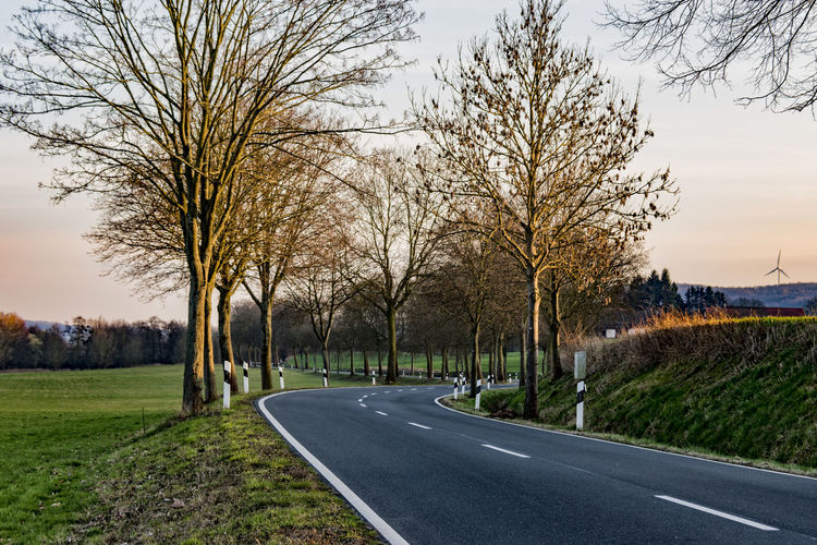 tree avenue Asphalt Day Early Evening Light Empty Road Germany Grass Hartz March 2017 Nature Niedersachsen No People Outdoors Road Sky The Way Forward Tranquility Tree Tree Avenue