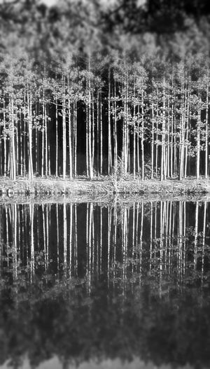 Fine Art Photography Relected Trees In River Ansel Adams Inspired Black And White Edit EyeEm Best Shots - Black + White Pixlr Edit