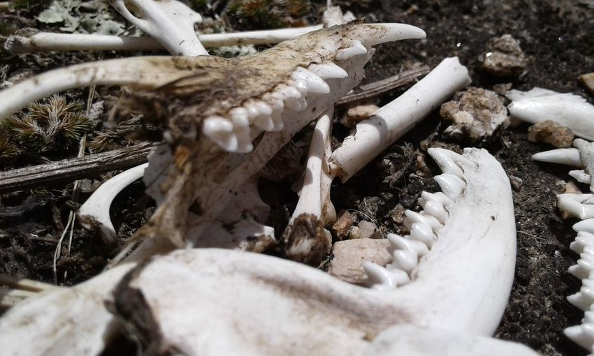 Close-up of animal bone on field