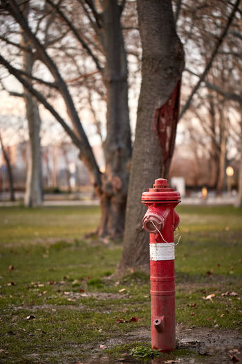 Red fire hydrant on tree trunk in park