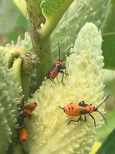 Animal Animals In The Wild Animal Themes Animal Wildlife Insect Invertebrate Group Of Animals Close-up Beauty In Nature Day Green Color Nature No People High Angle View Plant Leaf Outdoors Plant Part