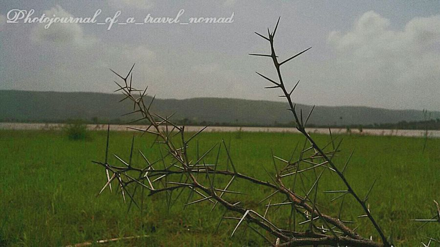 Nature's creation contradiction ... they are painful when touched but look at the beauty when clicked ... truly Nature's hidden beauty ... Eyeem Exclusive Itchyfeet Photojournal_of_a_travel_nomad India_gram Travelphotography Shutterbug_travels Digitalnomad Thorns Traveller_india Incredible India Natureshiddenbeauty