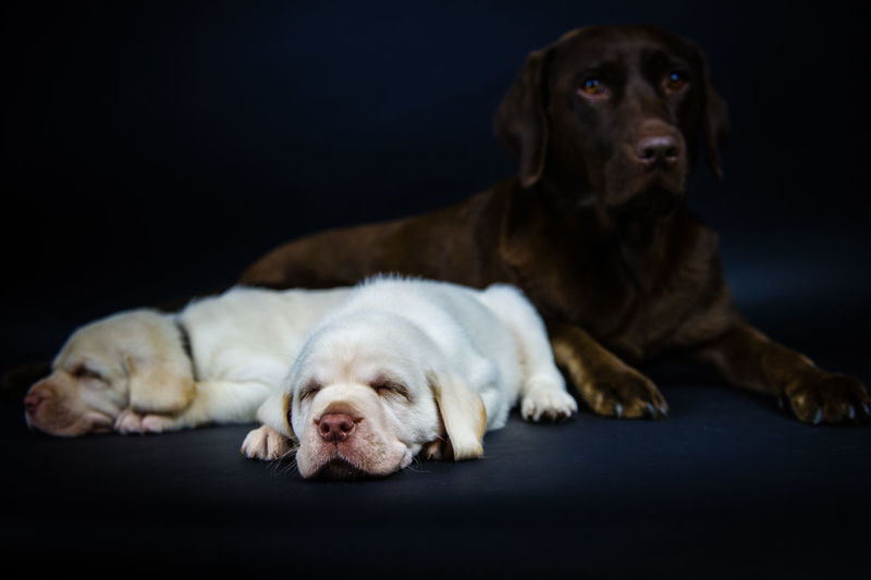 Dog with cute white puppies