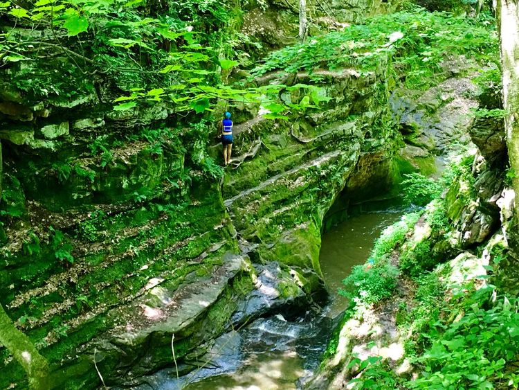 Paradise in Wisconsin, Pewits Nest Colors Of Life Greenery Cliff Jumping Cliff Diving Pewits Nest Trees Helmet The Great Outdoors - 2017 EyeEm Awards Ravine Cavern Moss Plants Paradise Cliffs Rocks Rocks And Water Plant Life The Great Outdoors - 2017 EyeEm Awards Sommergefühle