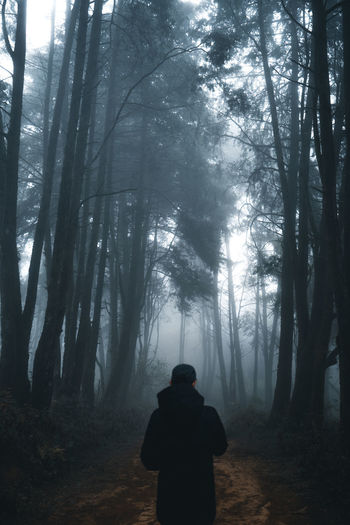 Rear view of man standing in forest against trees