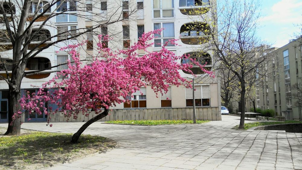 Spring Speingtime Blocks Concrete Socialism Pink Flowertree Panel Romantic EyeEm City Europe Easterneurope Hello World Beauty In Nature Beauty Nopeople Taking Photos Buliding Street Life Sunshine Capture The Street Photographer - 2016 EyeEm Awards Millennial Pink