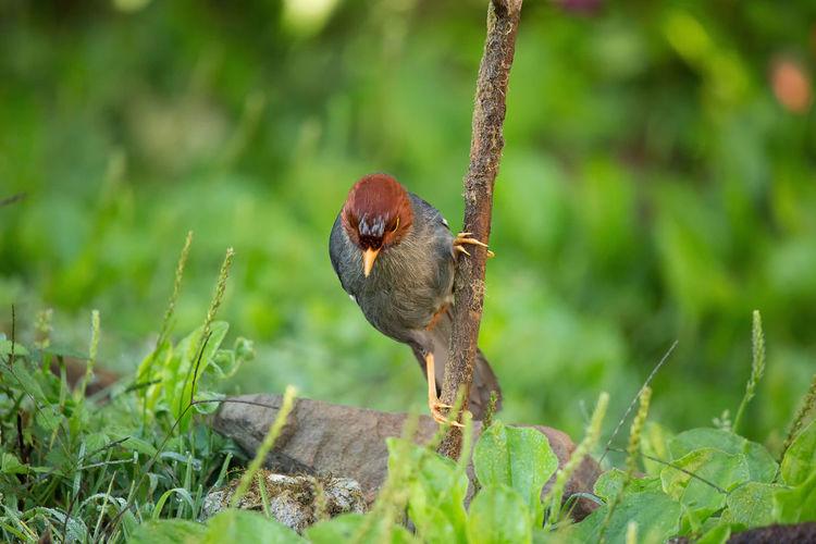 Close-up of a bird perching on grass