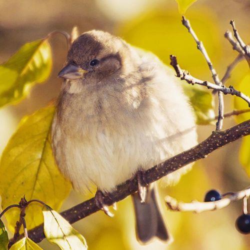 Sparrow EyeEm Nature Lover EyeEm Birds Birds Of EyeEm  Sonya77ii Beautiful Day Enjoying The Sun Sonyphotography