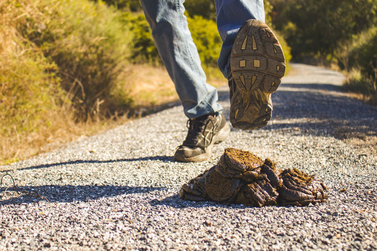 cow dung on road while a man passing over it Cow Dung Cow Dung Asphalt Road Low Section Human Leg Sunlight Body Part Human Body Part Shadow Nature One Person Day Shoe Land Men Real People Walking Outdoors Limb Lifestyles Human Limb Human Foot Rural Smelly Smell Leg Disgust Messy Revolting Stepping Feces Dry Fuel Fertilizer