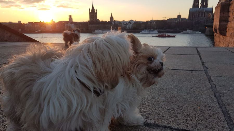 View of a dog in city during sunset