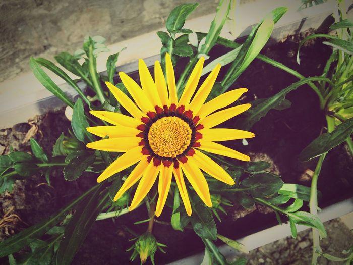 Hello World Flower Flowers,Plants & Garden