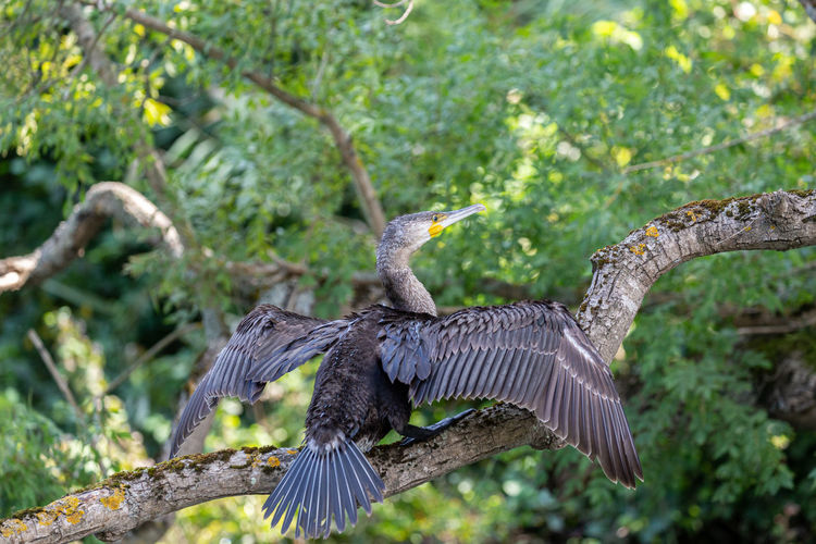 Bird flying in a tree