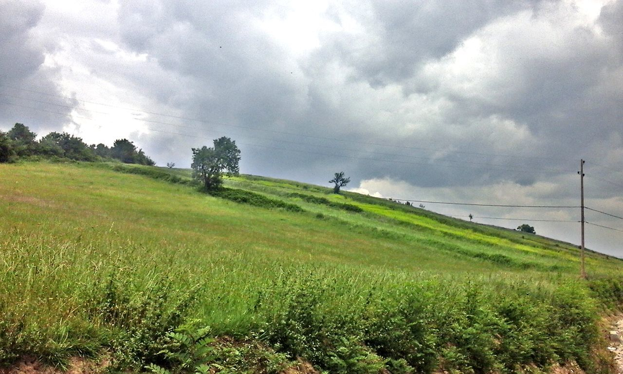 field, sky, landscape, nature, agriculture, cloud - sky, beauty in nature, growth, grass, scenics, day, outdoors, no people, tree