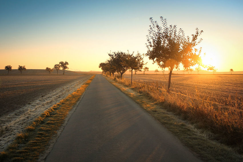 Beauty In Nature Clear Sky Copy Space Diminishing Perspective Empty Field Landscape Lens Flare Nature Non-urban Scene Outdoors Remote Road Rural Scene Scenics Sun Sunbeam Sunlight Sunset The Way Forward Tranquil Scene Tranquility Transportation Tree Vanishing Point