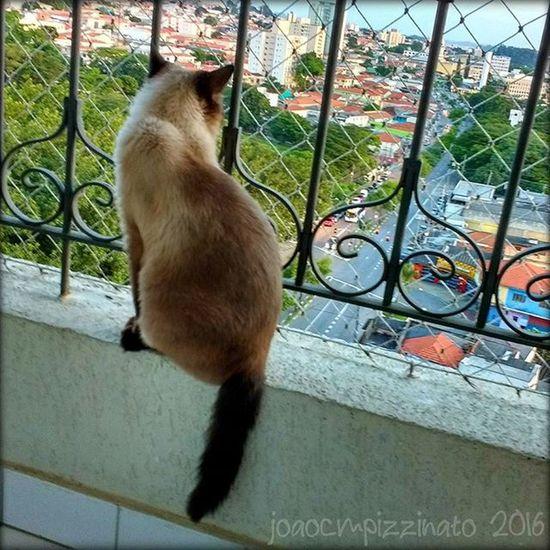 Nina. Cat Pet Animal Colors City Zonasul Saopaulo Brasil Photograph Photography Ir_animals Animalsmood Animalsturk Icu_topcatbreeds