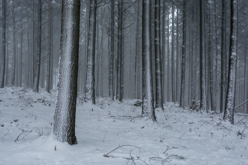 Winter im Nationalpark Hunsrück-Hochwald Hunsrueck Beauty In Nature Cold Temperature Day Forest Landscape Nature No People Outdoors Scenics Snow Tranquil Scene Tranquility Tree Tree Trunk Weather Winter
