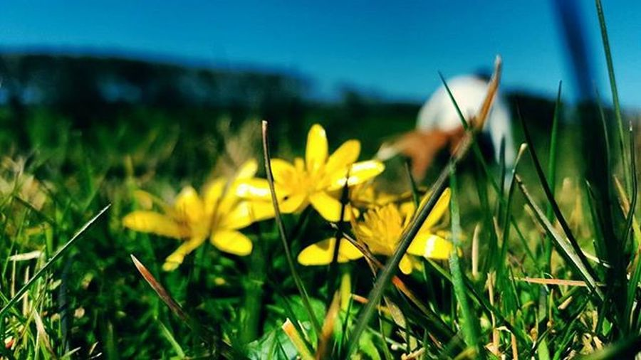 Wildlife Yellow