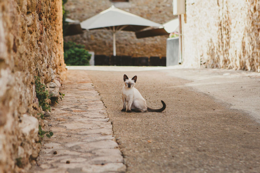 Animal Animal Themes Architecture Built Structure Cat Day Domestic Domestic Animals Domestic Cat Feline Footpath Mammal Nature No People One Animal Pets Plant Selective Focus Sitting Surface Level Vertebrate