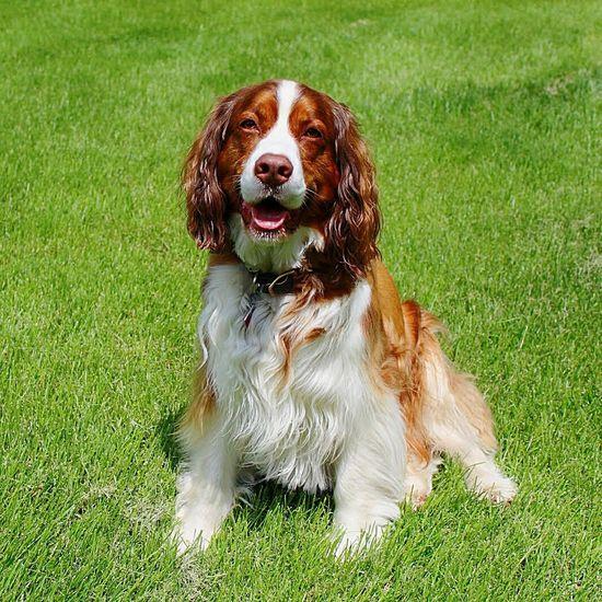 Happy Dog Dog Pretty Dog