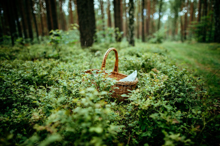 High Angle View Of Basket On Field In Forest