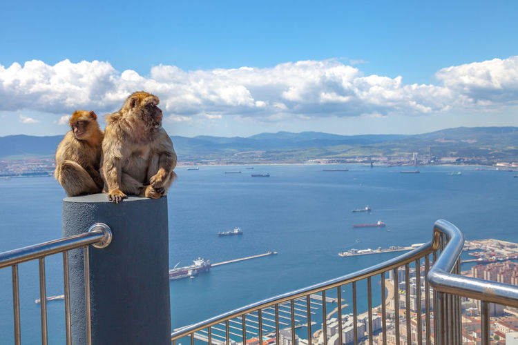Two funny monkeys outdoors