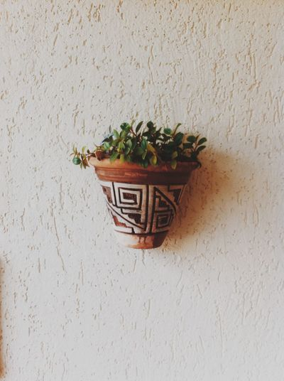 Close-up of potted plant in basket against wall