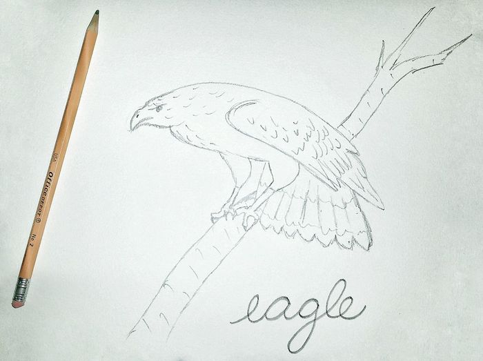 Eagle Bird Drawn Art Animal Pencil Paper Science Close-up Drawing - Art Product Line Art Doodle Sketch Drawn Pencil Drawing Sketch Pad Drawing - Activity