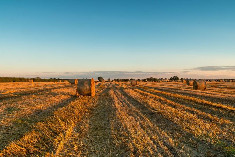 Landscape Field Agriculture Tranquility Rural Scene Tranquil Scene No People Beauty In Nature Nature Scenics Clear Sky Outdoors Sky Day Grass Sunset Hay Bale Summer Exploratorium