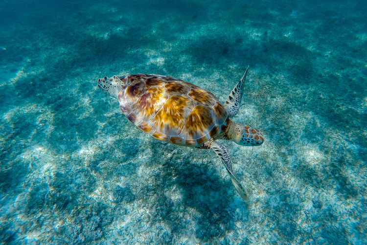 Animal Themes Animal Wildlife Beauty In Nature Blue Close-up Day Natural Pattern Nature No People Outdoors Sea Life Turtle Water Wildlife