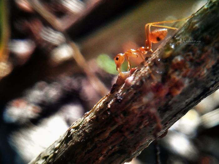 Ants Feasting Eyeem Philippines EyeEm Best Shots - Macro / Up Close
