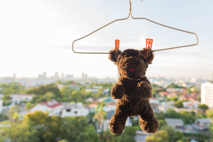 Animal Bear Clean Clothes Pegs Cute Dog Doll Dry Fur Hang Hanger Hanging Hanging Out Puppet Sunlight Wash
