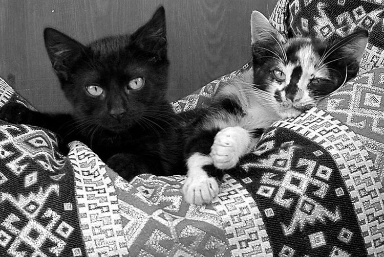 Blackandwhite Black & White Cat Cats