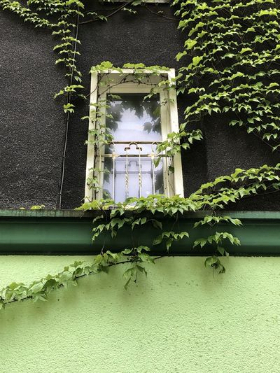 Low angle view of ivy on building wall