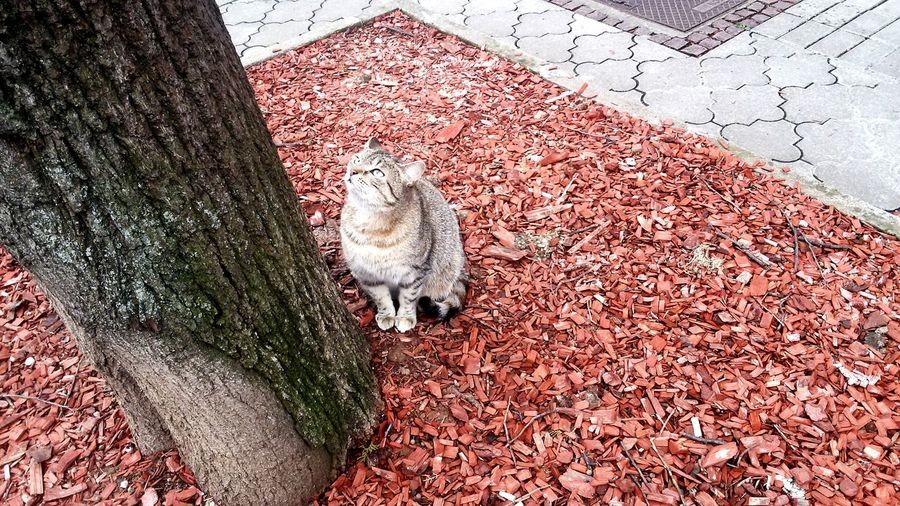 High angle view of cat sitting on red gravel by tree