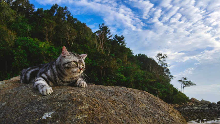 Cat sitting on rock against sky