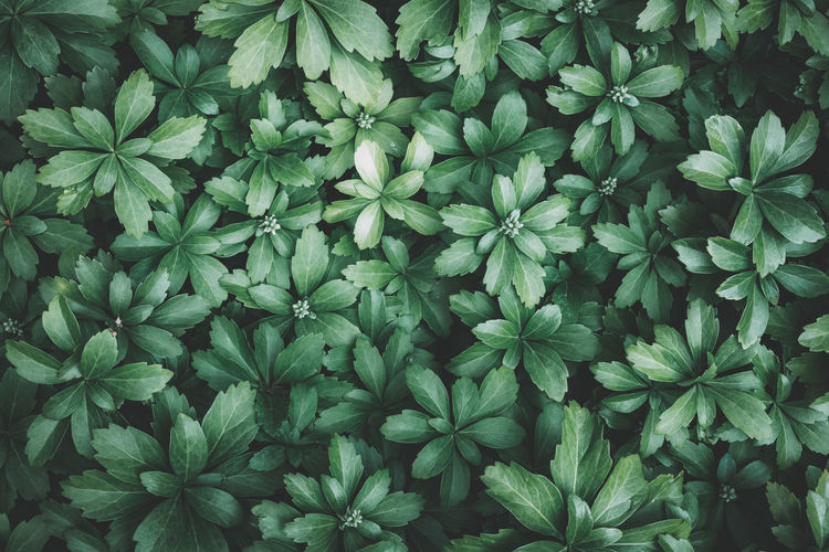 Backgrounds Beauty In Nature Blätter Botany Closeup Full Frame Garden Garden Photography Green Green Color Growing Growth Leaf Leaves Lush Foliage Natural Pattern Nature Nature Nature Photography Nature_collection Plant Plant Plants Tranquility